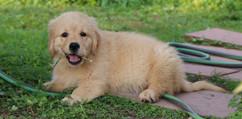 Viola puppy  - 56.jpg