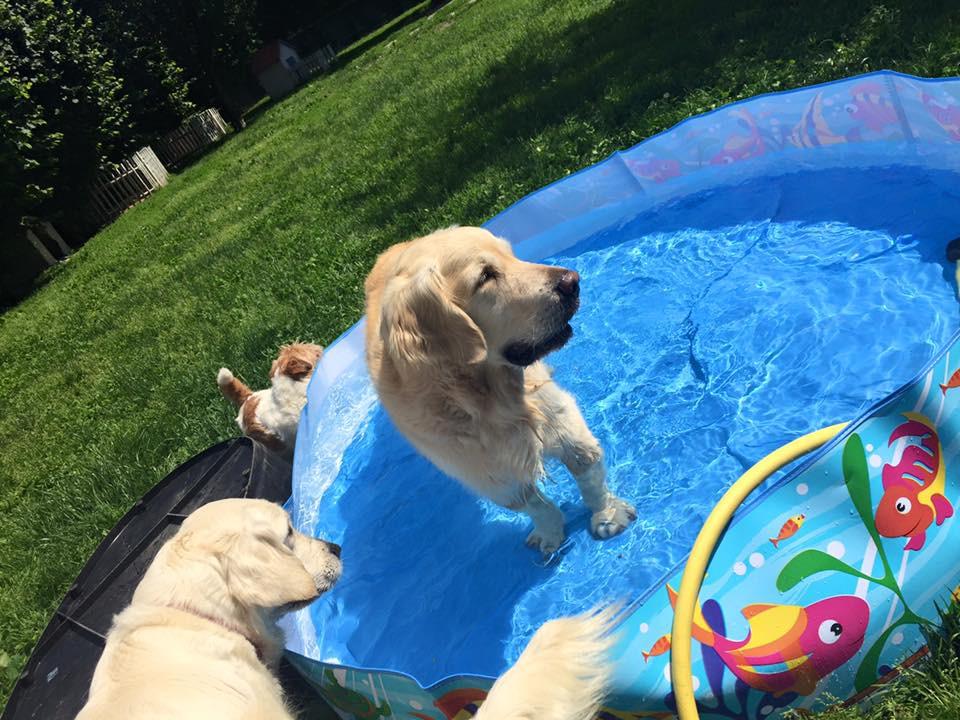 Tuffo tuffo nelle piscinette!!