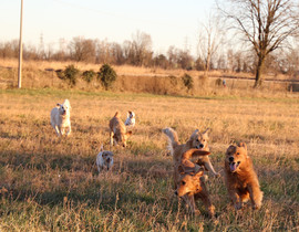 my dogs - 1 (16).jpg
