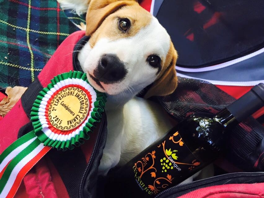Leon Best of Breed Piovera 2015