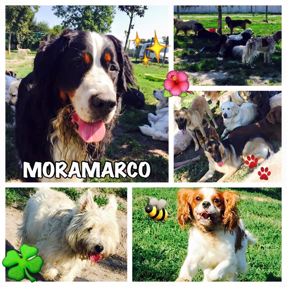 La più bella pensione per cani!