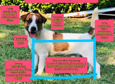 Lo standard del Jack Russell Terrier