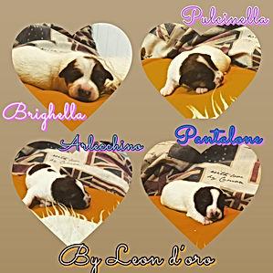 Happy e Oro puppy.JPG