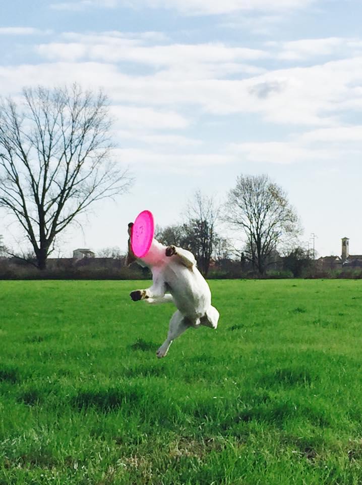 Leon Disc dogger