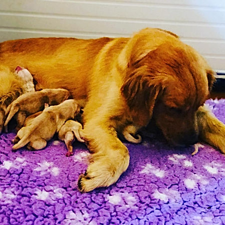 Seven Puppies <3.JPG