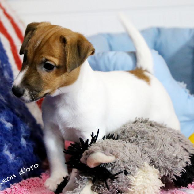 Puppy  Sofia 2019 - 21 mod.jpg