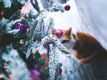 Vánoce jsou zadveřmi