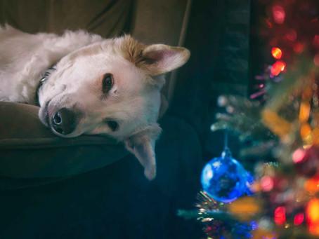 Den před vánoci