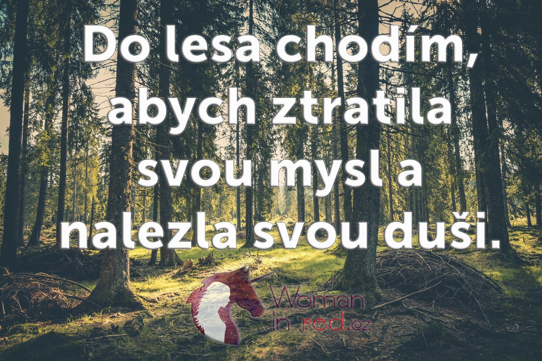 do lesa chodím.jpg