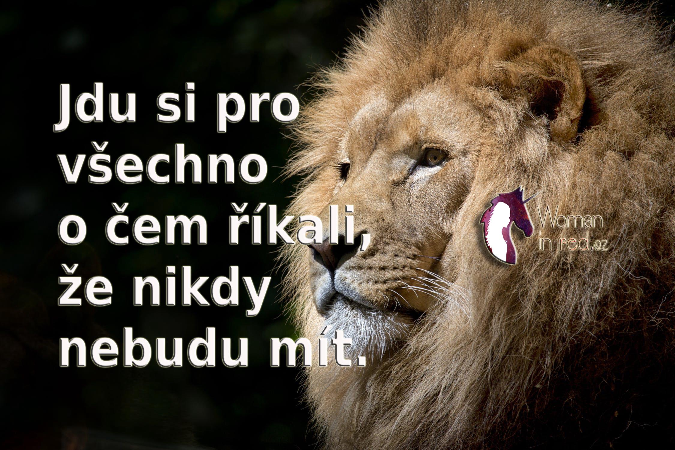 lion-wild-africa-african-3.jpg