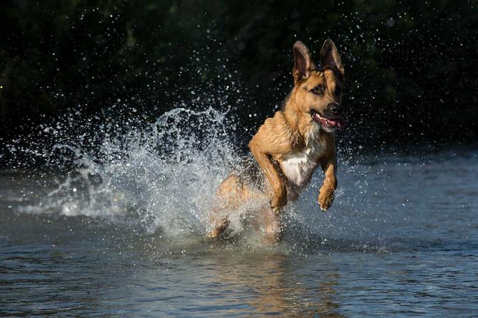 cisyap - dog, water, fun