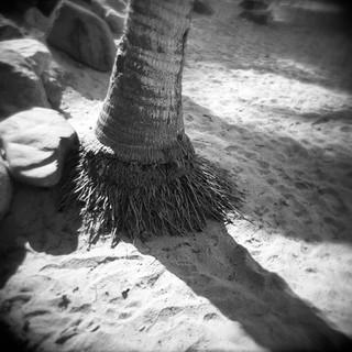 Palma a la Playa