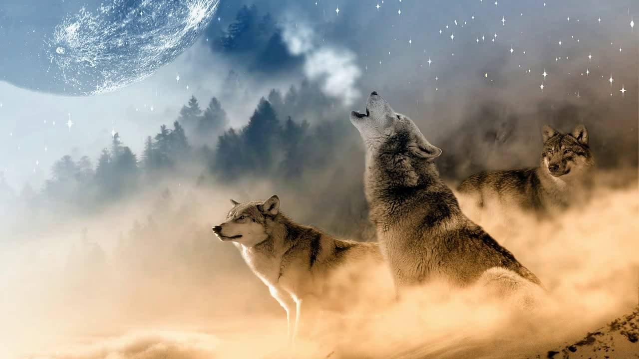 Lobos-Uivando-1.jpg