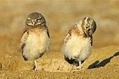 owls_1.jpg