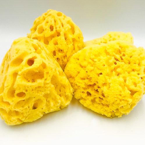 All Natural Yellow Sea Sponge