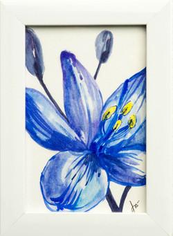 Flor Azul-Acuarela sobre papel