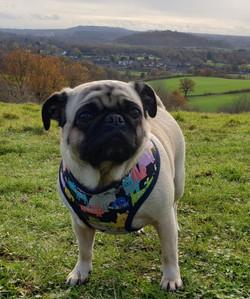 Lulu on a hill