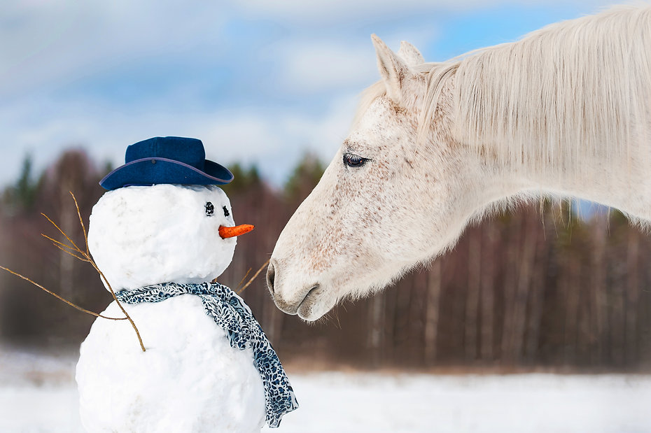 Portrait of grey horse with snowman.jpg