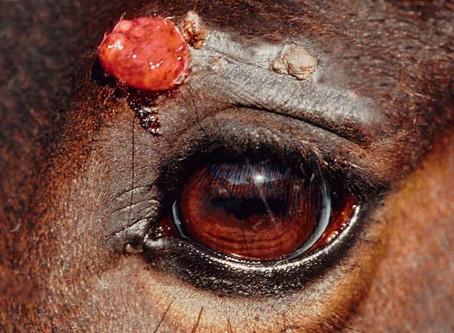 microRNA-basierter Screening-Test für Pferde mit Hauttumor