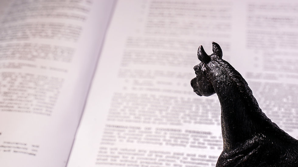 An educated horse reviews a contract.                         .jpg