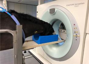 Untersuchungsstand zur stehenden CT- Untersuchung des Pferdekopfes