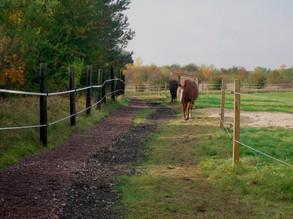 Bodenschonende Befestigung von Laufflächen auf Paddock-Trails