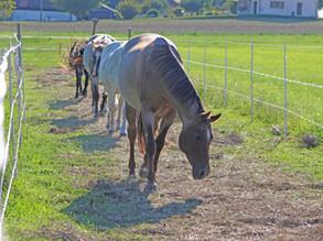 Forschung für Pferd und Umwelt