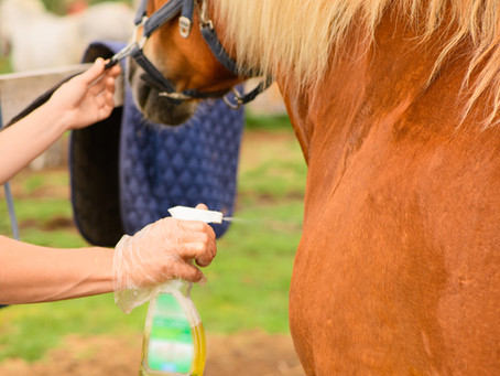 Trifft die nächste Pandemie das Pferd?