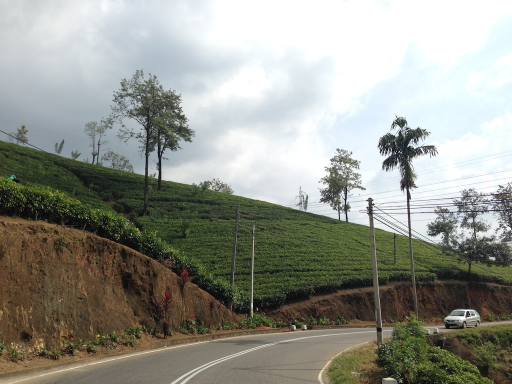 Tea Estates of Nuwara Eliya