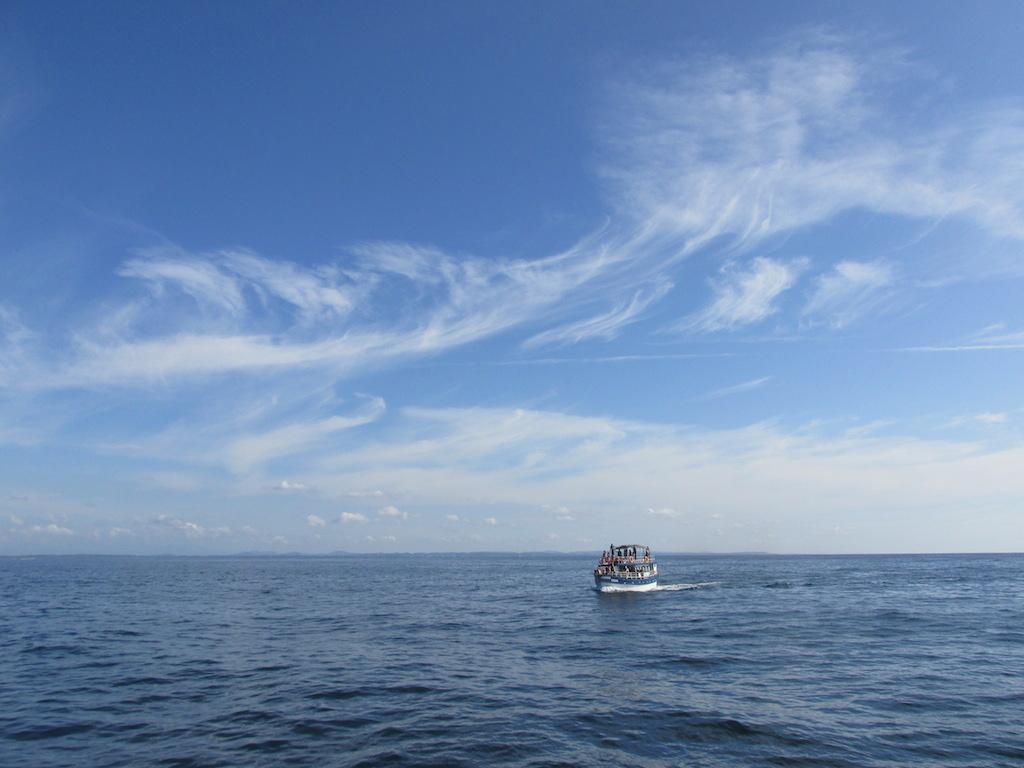 Whale watching cruise at Unawatuna