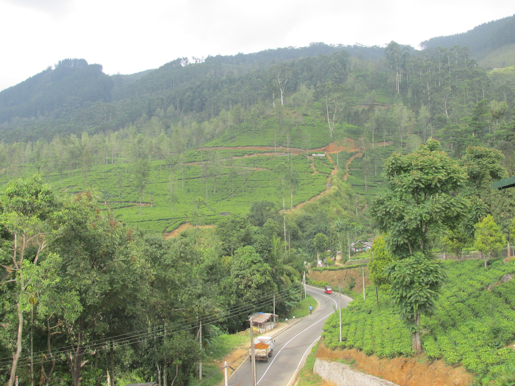 From the tea factory of Nuwara