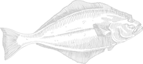 hellefiks hvid.png