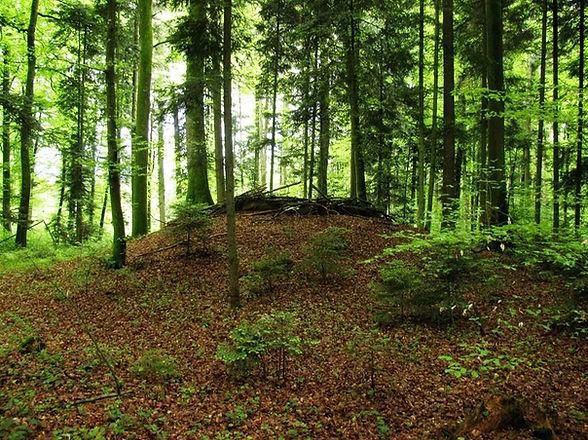 Tumulus Grossholz.jpg