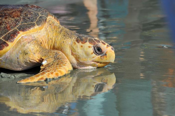 Georgia Sea Turtle Center