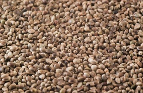 hemp-seed.jpg