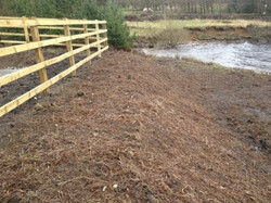 Reedbed for United Utilities