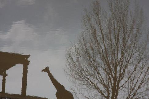גן החיות - צילום אומנותי