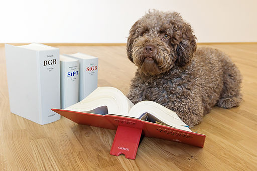 Tierrecht Hunderecht Hundebiss Anwalt in Regensburg