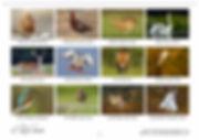 Screenshot (17) copy.jpg