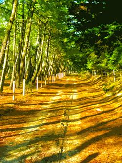 Chemin –Luzeronde