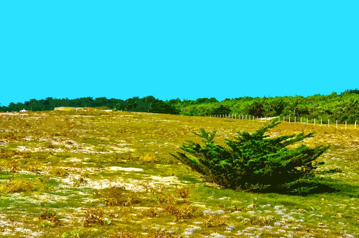 Buisson sur la dune - 2 - Luzeronde