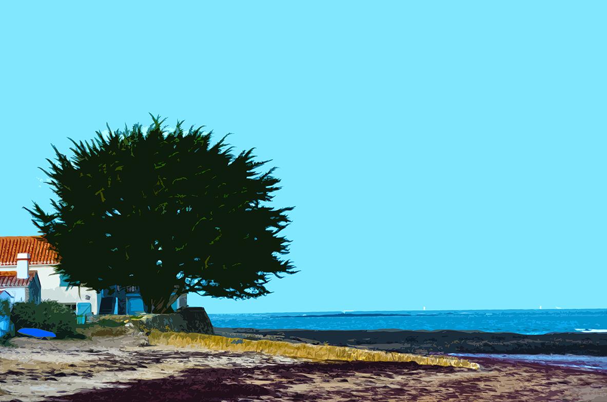 Arbre sur la plage