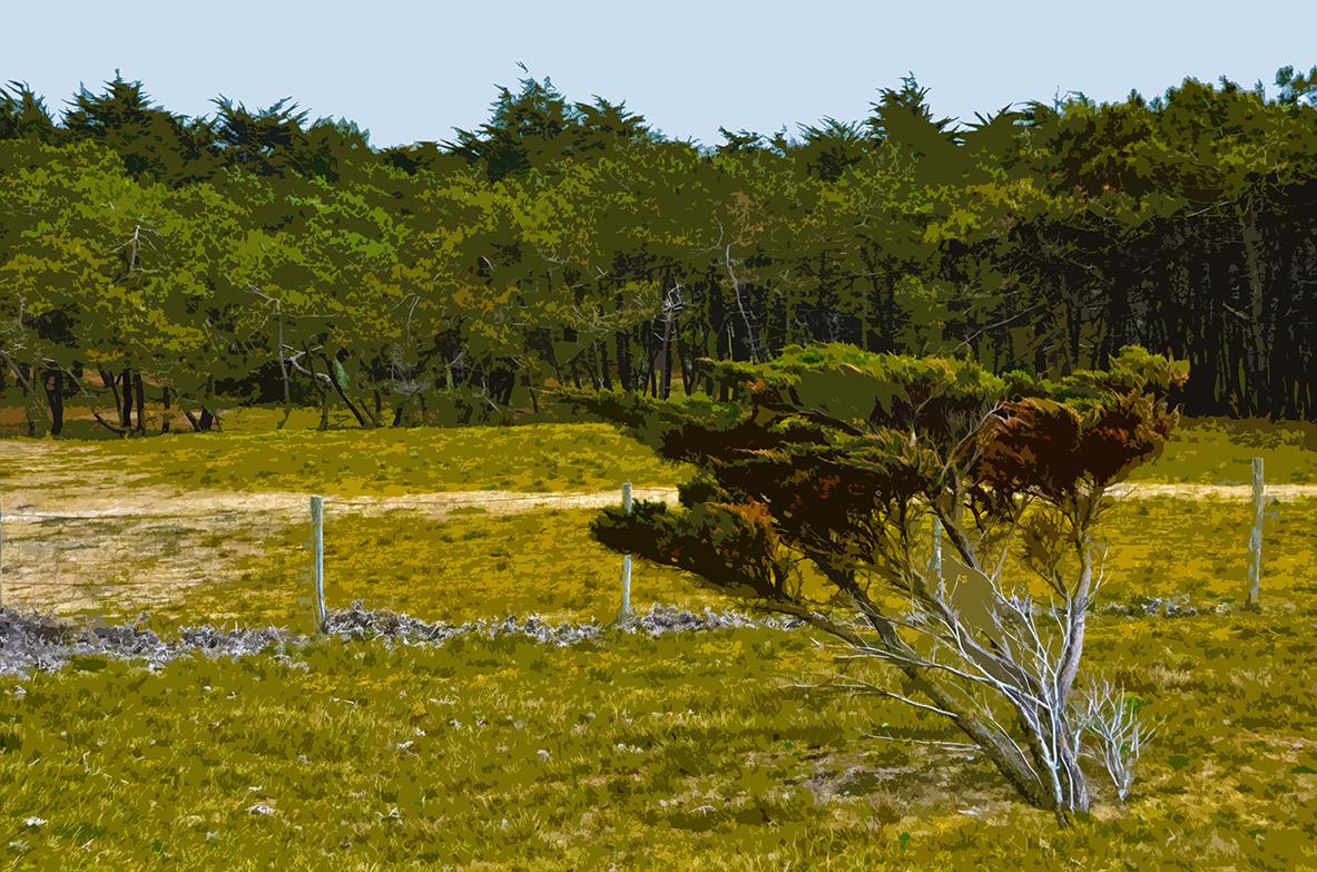 Buisson sur la dune - 4 - Luzeronde