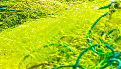 Filet jaune et cordage vert
