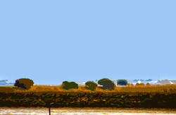 Buissons Alignés