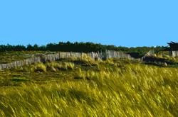 Haie sur la dune - 2 - Luzeronde