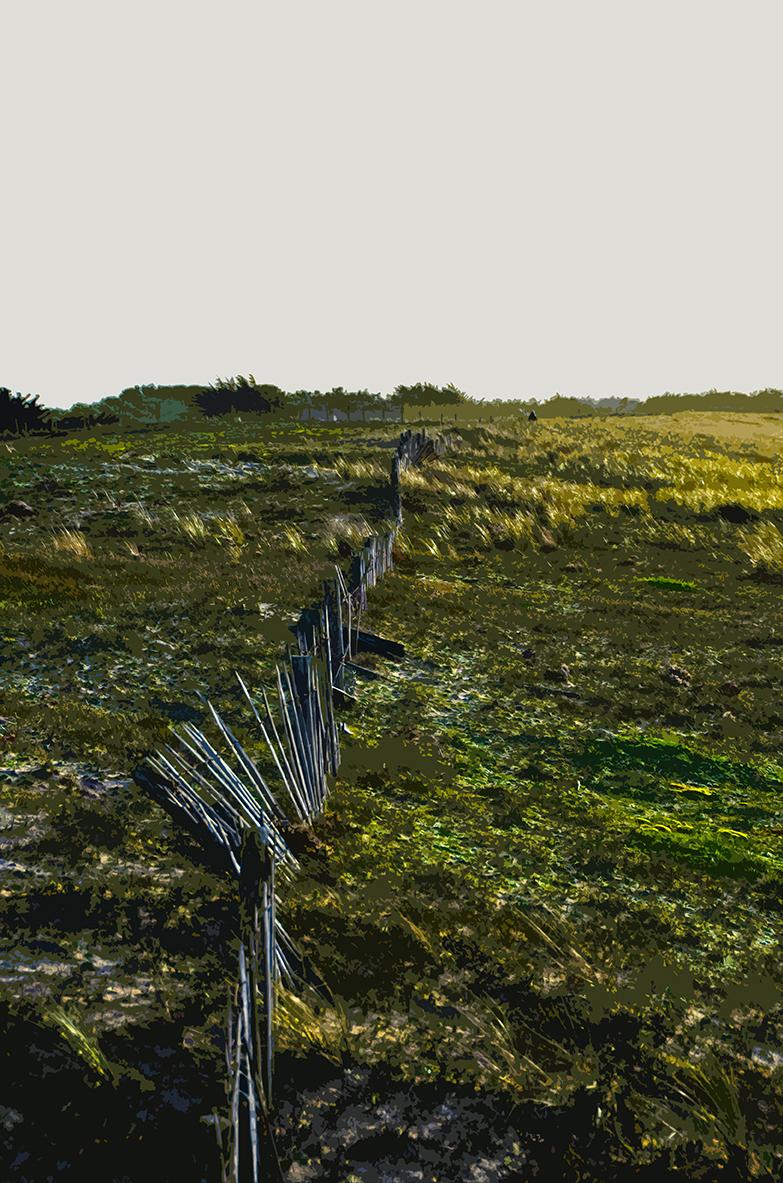 Haie sur la dune - 3 - Luzeronde