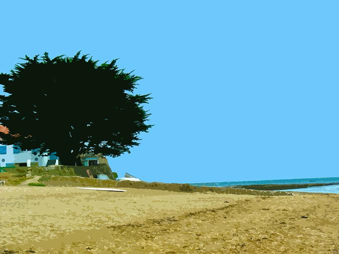 Arbre sur la plage – 3