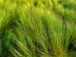 Herbes, dune - Luzeronde