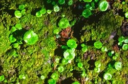 Champignons – Bois de la Chaize